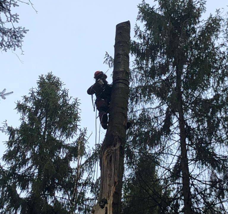 wycinka drzewa zwywozem